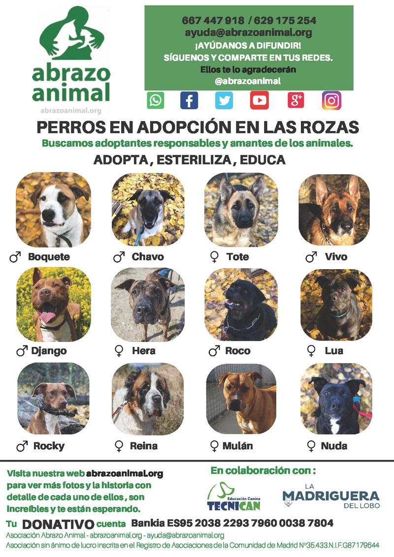 Adoptar Animales Ayuntamiento De Las Rozas De Madrid